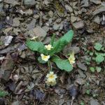 Цветы крыма #3