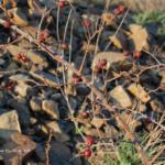 Красные ягоды #7