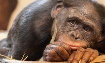 Длинные ноги красоток и обезьяний вопрос