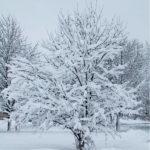 Дерево в белом
